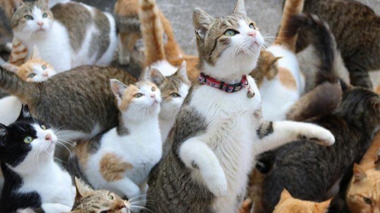 Herding Cats…
